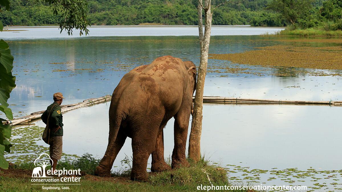 Elephant Conservation Center