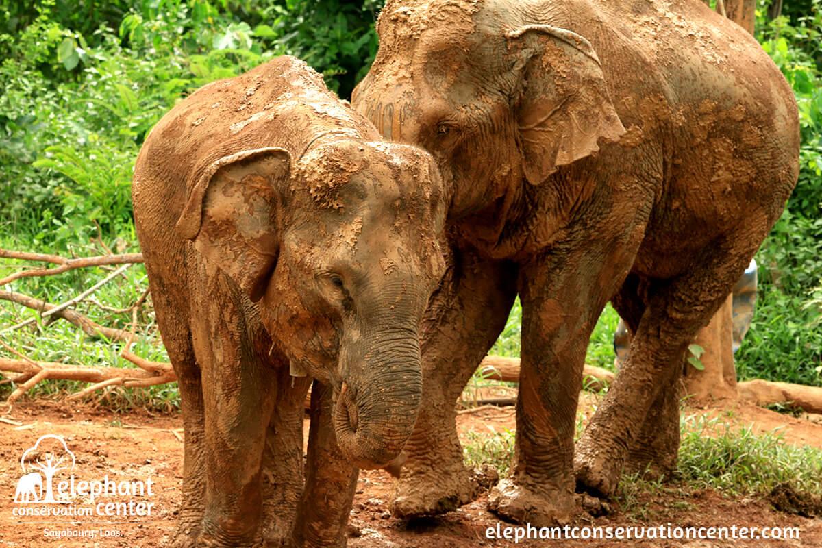 book now elephant conservation centerelephant conservation center